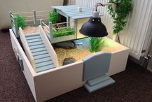 tortoise σπίτια