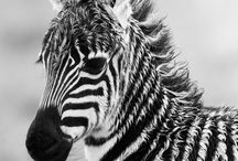 - Animals B&W / Black-and-White themed.
