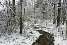 Wonderful Winters at PP / Beautiful shots taken in the eight Preservation Parks of Delaware County
