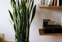 Nature&Plants