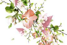 Virágok png