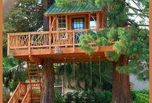 Tree Houses / Tree house
