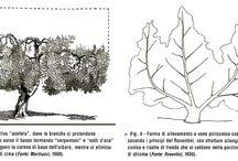 forme di allevamento alberi e arbusti