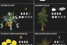 Plants/nature