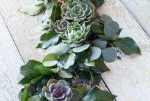 con succulente