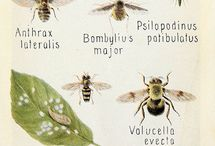 insetti e tavole sistematiche