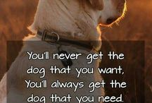 dog quotes / Learn about dog quotes
