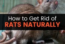 PC / Pest Control - natural and non-toxic