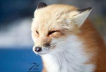 Foxy ^^ <3