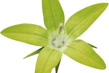 Green Flowers & BGs