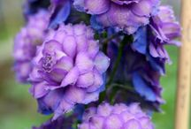Flowers / by Alice Hartman