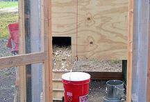 Chickens / Watering bucket