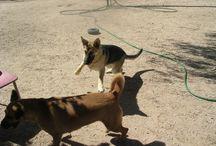 Biggish Doggie - Molly