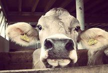 Photography board / Farmlife