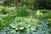 Shady things - garden ideas / by Hannah VanderHart