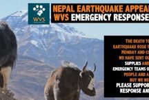 Nepal Earthquake Emergency Appeal / We are sending a veterinary response team to Nepal. With disasters like this, we carry out mass vaccinations of livestock to stop the spread of any disease around aid camps or remote villages.