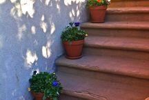 Garden/Yard / by Kelly Miller