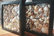 Shell displays / by Chris Szabo