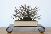 Bonsai Development: Ideas & Inspiration
