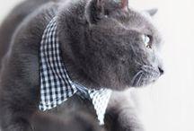 Amazing Fur Creations!