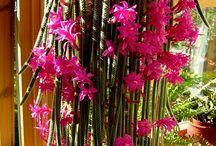 cactus, piante grasse e succulente