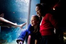 Inside Mystic Aquarium / Animals. Staff. Volunteers. Guests.