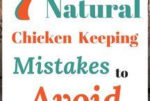 Chickens / Raising chickens