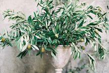 LINDIVIDU * Olive