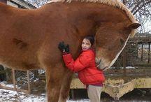 Super horse !!