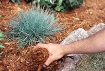 Organic Gardening Water Conservation