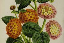 Kasvit / Kukat ym kasvit