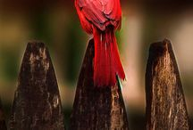 Birds.Bees. Hummingbirds n their houses & Baths / Birds of different colors an their homes, birdbaths, and bee hives