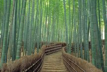 Japan / Planning the perfect itinerary for Japan takes time but it is worth it to make sure you have the right mix of things to do, things to eat and which transport will work best for your trip.