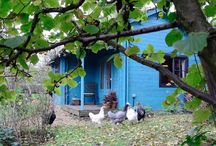 Doris & Mistletoe Cottage