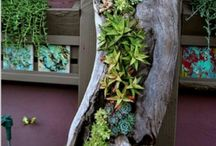 tableaux vegetal