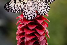 borboletas , aves aquáticos e outras maravilhas
