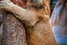 Love me a Furry Friend!