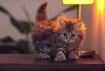 the-fluffy-cute