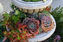 Succulents I Have Fallen In Love With / SISTERS ANTIQUES / by SISTERS ANTIQUES / Patty Green