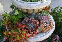 garden / by Linda Coffey