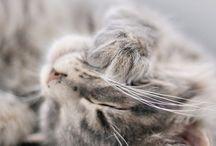 MeowKittyMeow / by Emily Meade