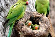 животные,птицы