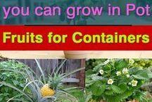Ideas for gardens