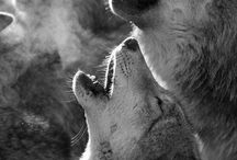 Cosas de lobos