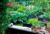 garden ideas???