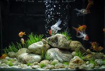 Fish (Tanks)