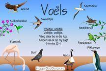 Voels