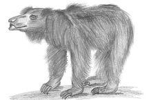 Pencil Sketches of Wild Animals