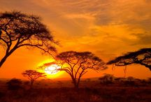 come and see the amazing of Serengeti