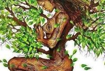 Cuadros Bonitos / Naturaleza y Yoga